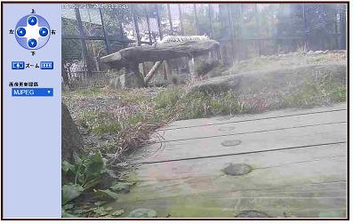 ホワイトタイガーライブカメラ 平川動物公園