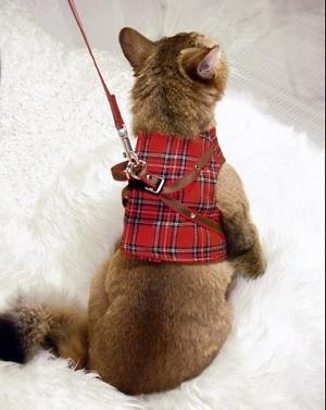 ハンドルベスト お出かけ、通院に猫ちゃんをしっかり確保