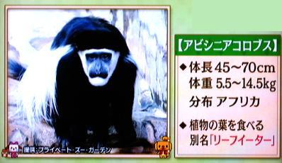 アビシニアコロブス サル 平川動物公園 ペットの王国ワンだランド