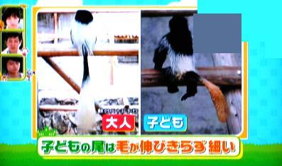 しっぽがエビフライ サル 平川動物公園