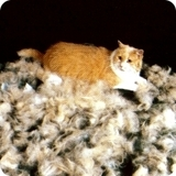 ファーミネーター 猫 ブラッシング