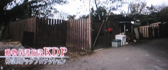 犬 動物保護施設KDP 森泉 志村どうぶつ園