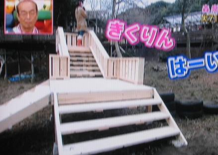 犬の施設 森泉 階段 志村どうぶつ園