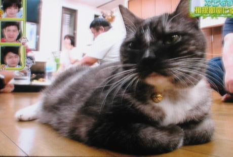 荒汐部屋 モル 猫 ペットの王国ワンだランド