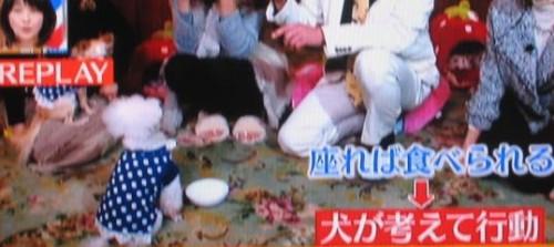 森泉 カリスマ訓練士 藤井聡 デヴィ夫人 犬 しつけ