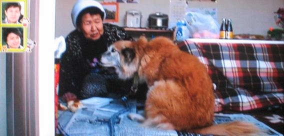 仮設住宅 離れ離れの飼い主と犬