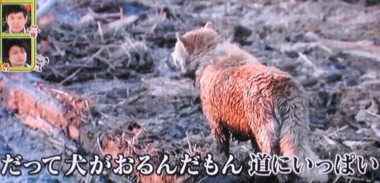 福島県 被災犬