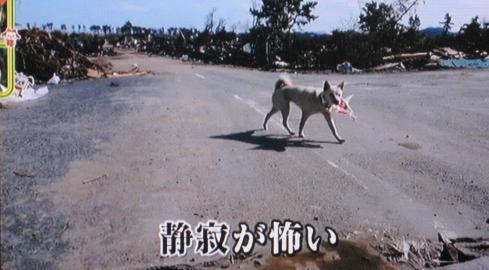 福島県 被災犬 ワンだランド