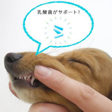 コスモスラクトデンタルジェル 犬・猫 塗るだけハミガキ