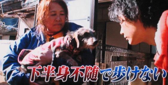 犬猫みなしご救援隊 広島 中谷百里さん