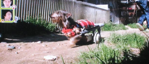 車いすでも楽しく走る ワンだランド
