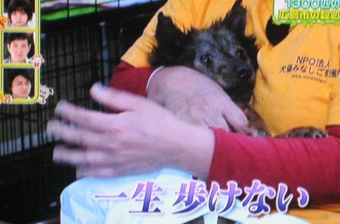 犬猫みなしご救援隊 保護施設 ペットの王国