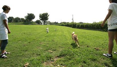 中型・大型犬専用ドッグラン 群馬県