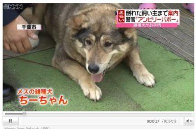 千葉県のちーちゃん メスの犬(わんちゃん)飼い主を助ける