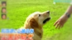 災害救助犬 ラブラドールレトリバー 文太くん 青森県 ペットの王国ワンだランド