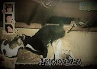 天井に隠れる猫たち ペットの王国ワンだランド