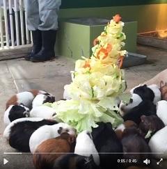 福岡市動物園 おいしいクリスマスツリー モルモット イベント
