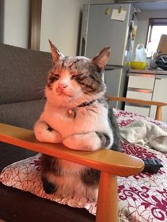 Twitterで話題のヒーターに当たるうちの猫ですお納めください。画像
