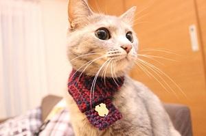 猫専用マフラー ネコマフラーを販売開始 バレンタインギフトにも