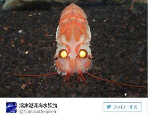 今日の発見!深海のバルタン星人 沼津港深海水族館 静岡県の水族館