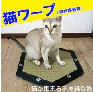 猫転送装置 猫ワープはどこで買える?