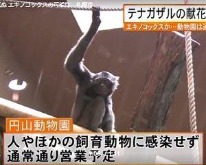 テナガザル エキノコックスか?円山動物園 営業予定