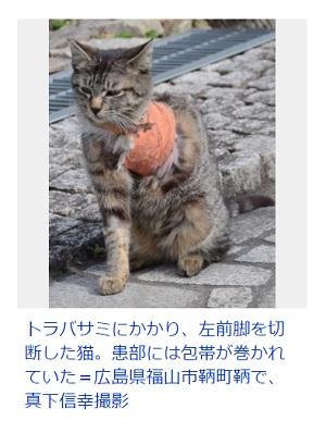 猫トラバサミ被害 広島県福山市 鞆の浦 鳥獣保護法違反か