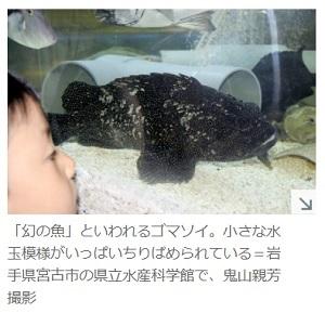 幻の魚 ゴマソイ 岩手県立水産科学館で人気者に!岩手県宮古市