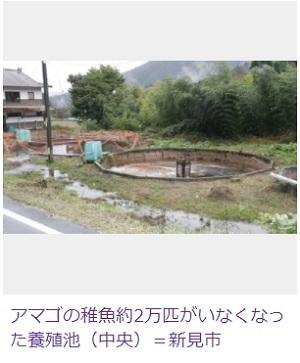 アマゴ稚魚2万匹消える 謎 盗まれたか 岡山県新見市 養殖場