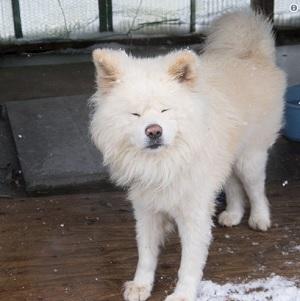 秋田犬「わさお」の飼い主、菊谷節子さん死去